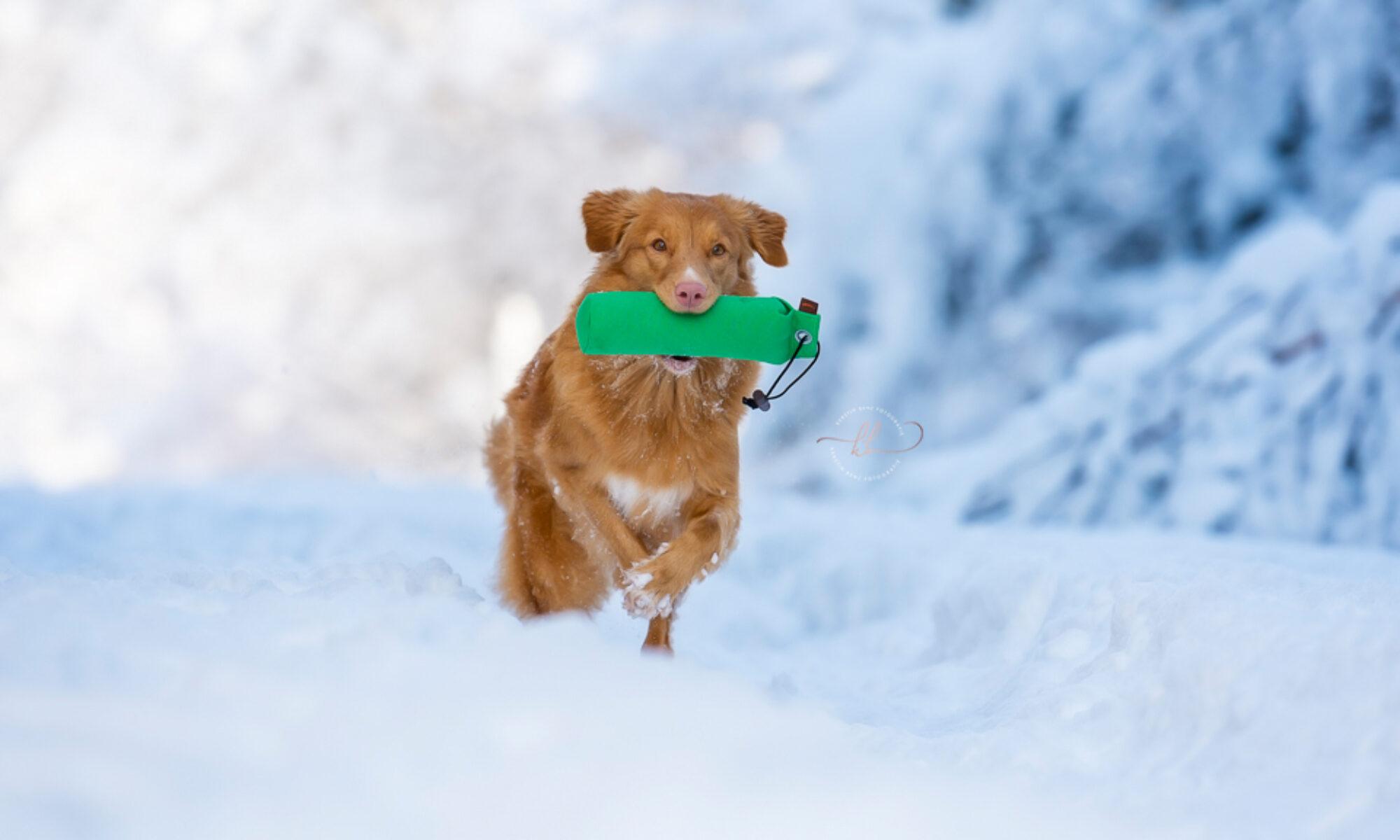 Hundephysiotherapie und Naturheilkunde